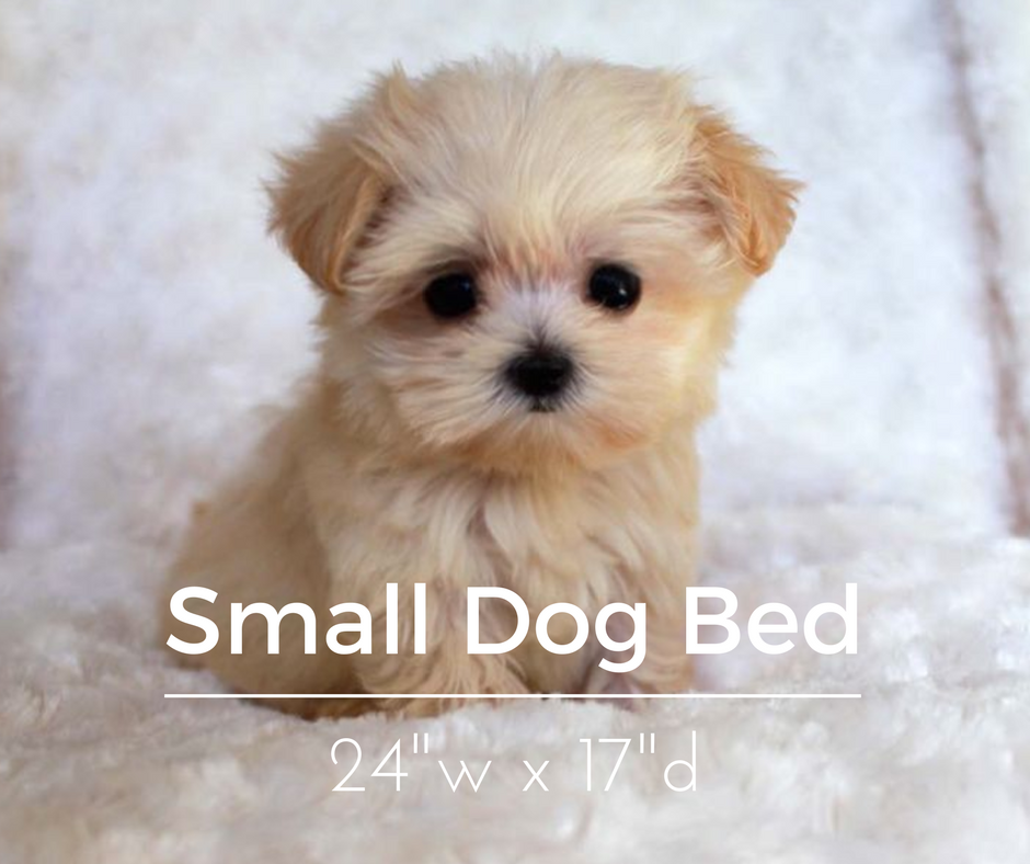 Small Dog Breeds For Guys